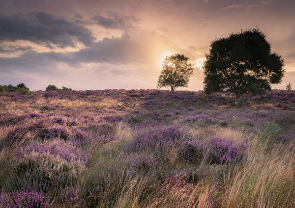 Suffolk Heaths Workshop